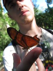 (ƒahr) Tags: viaje argentina animal animals brasil butterfly iguazu fahren misiones fozdoiguaçu fahr