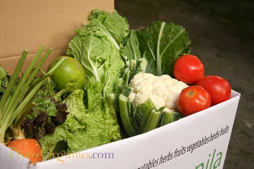 OrganicManila-med box 2