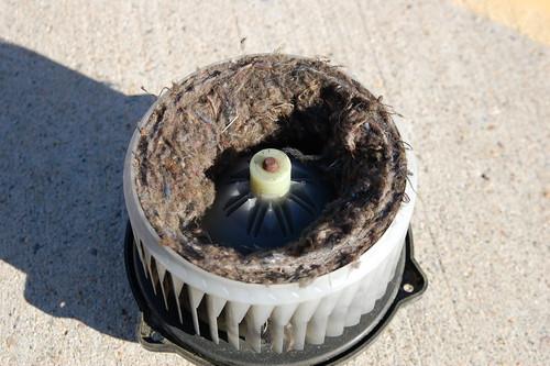 Nest of fibers in the fan