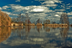 (.sxf) Tags: trees sky lake reflection nature water grass clouds skyscape landscape see wasser himmel wolken bume spiegelung willowtrees weepingwillows lakescape trauerweide