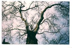 Anglų lietuvių žodynas. Žodis tendril reiškia n augalo ūselis lietuviškai.