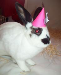 pinK  piK (Evelin Marques) Tags: cute happybirthday fofa coelhinha rabbitmini minicoelho