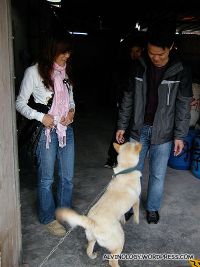A pet dog in the ceramic factory