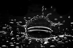 Droplet splash (Stphane Giner) Tags: macro water canon is eau drop 100mm droplet 28 usm goute stephaneginer