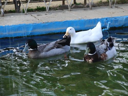anatomía del parque de la victoria de jaén: fuente de los patos