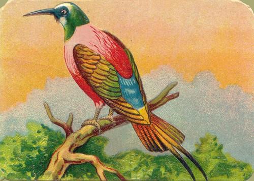 oiseauchromos 10