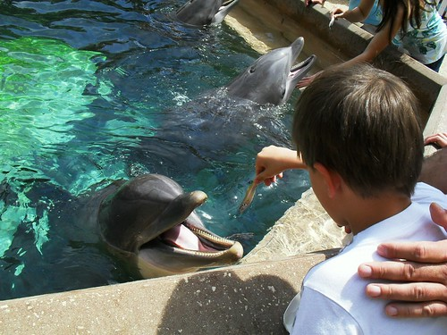 sea world 119