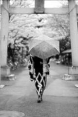 Series:KIMONO No.03 (Ayanami_No03) Tags: people woman monochrome japan umbrella tokyo blackwhite scenery  kimono  torii shintoshrine       eoskissx4 eos550d