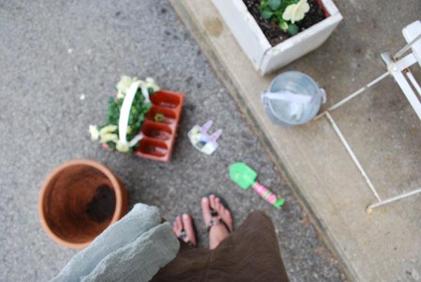 plantingpansiesm