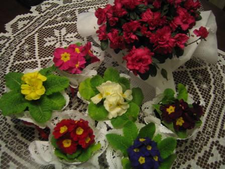Çuha Çiçeklerim