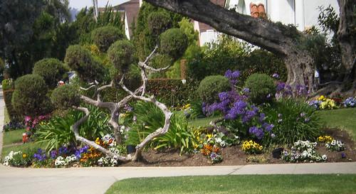 LA yard.jpg