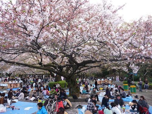 Picnic at Ueno Park