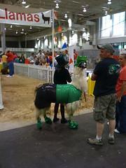Lucky Llama (Splanice) Tags: irish animal costume llama leprachaun stpatricksday stpattysday potofgold