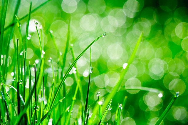 Water drops on grass 19