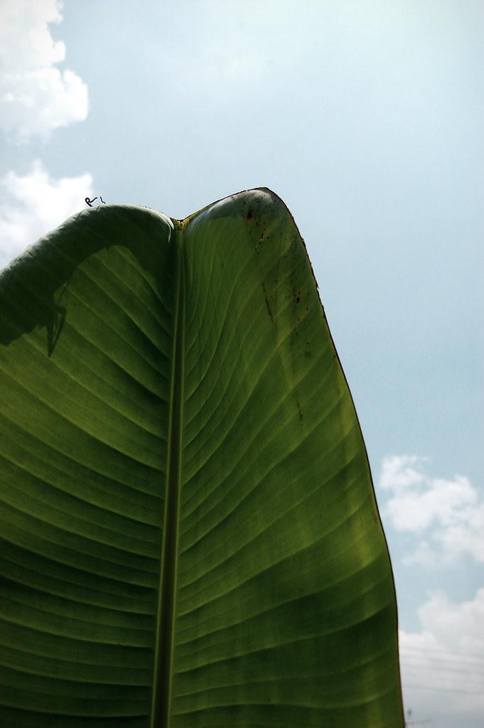 leave or leaves