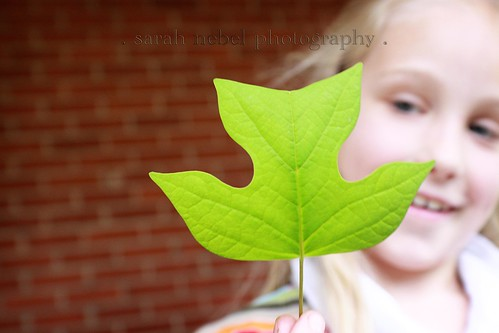 . leaf from ally .