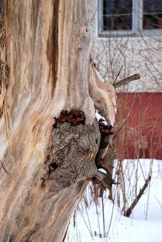The tree ©  akk_rus