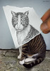 Pencil Vs Camera - 6 (Ben Heine) Tags: street new portrait 6 cute art strange face look animal wall cat hair paper buzz fur weird sketch eyes chat poem hand time body finger homeless dessin yeux odd doigt madness freak half series conceptual dimension bestfriend rue papier confusion poil flickrblog bizarre opticalillusion kot feature regard 4eyes miseenabyme number6 miseenabîme petersquinn benheine theunforgettablepictures drawingvsphotography 2dvs3d traditionalvsdigital pencilvscamera miseenabysme imaginationvsreality