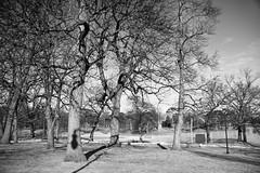 208/365 (Savannah Daras) Tags: park nature monochrome project pond shadows 365