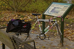 KelleyPointracycle