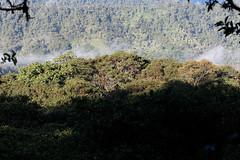 baudchon-baluchon-mindo-foret-equatoriale-6
