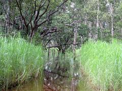 Tabletop Swamp
