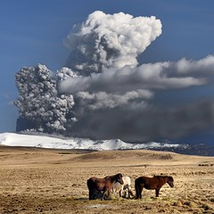 Hmum saman - Icelandic Horses and Eyjafjallajkull Eruption Live Webcam Links (Sig Holm very slow at the moment) Tags: horses horse island volcano iceland islandia eruption sland islande 2010 icelandic islanda eyjafjallajkull hestar hestur ijsland islanti  hross eldgos    slenskt
