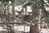 Oh deer in Banff (bev. davies) Tags: 8906