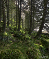 In search of Haida Spirit (janusz l) Tags: trees geotagged island islands bravo northbeach graham hdr provincialpark queencharlotte towhill haidagwaii ecologicalreserve janusz leszczynski naikoon insearchofhaidaspirit geo:lat=54076996 geo:lon=131796215 003357