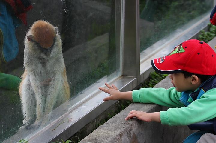 台北木柵動物園0051