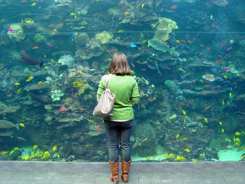Small fish, big sea