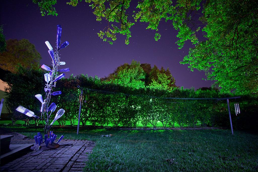 127/365: Blue Bottle Tree