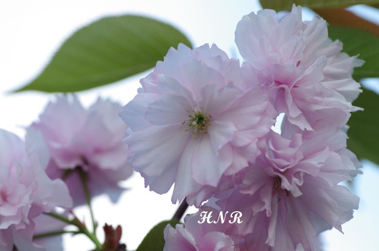 KMTN9038-b