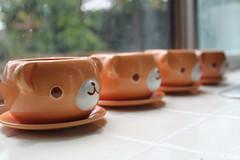 bear pots (・ω・) (iheartkitty) Tags: bear plant flower cute japan ceramic japanese bokeh planters pot kawaii daiso