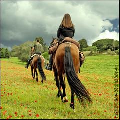 Riders On The Storm (m@®©ãǿ►ðȅtǭǹȁðǿr◄©) Tags: barcelona horses españa canon caballos poppies cavalos catalunya uab amapolas bellaterra canonefs1855mmf3556 ridersonthestorm universitatautònomadebarcelona canoneos400ddigital m®©ãǿ►ðȅtǭǹȁðǿr◄© marcovianna