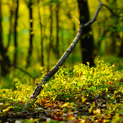 (Marcin Sowa) Tags: lighting wood trees light panorama sunlight color green grass forest woods nikon colorful soft shadows dof stitch bokeh pano 85mm calico f2 nikkor stitched d300 stitchedpanorama krakoff