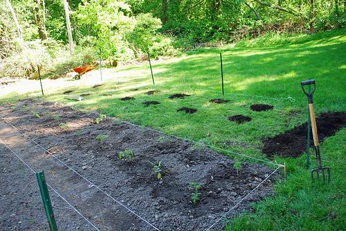 expanding garden 2