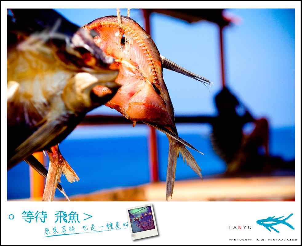 。等待 飛魚>  蘭嶼 初夏