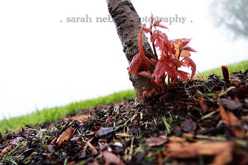 . dead tree ?