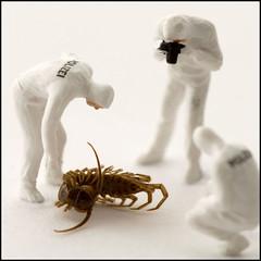 Crime Scene (hoho0482) Tags: insect dead police crime murder investigate csi macromondays
