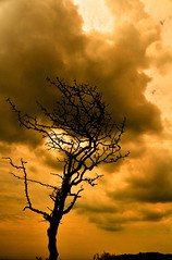 May the heavens strike you down (mendhak) Tags: lighting wallpaper sky orange storm tree lost cloudy ominous bare data lightning exif d90 shuttermode