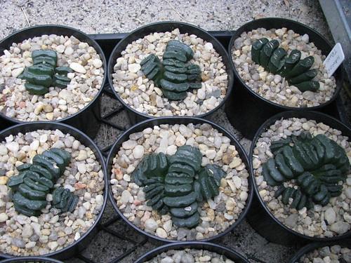 some of my succulents 4638573174_2fbfda7527