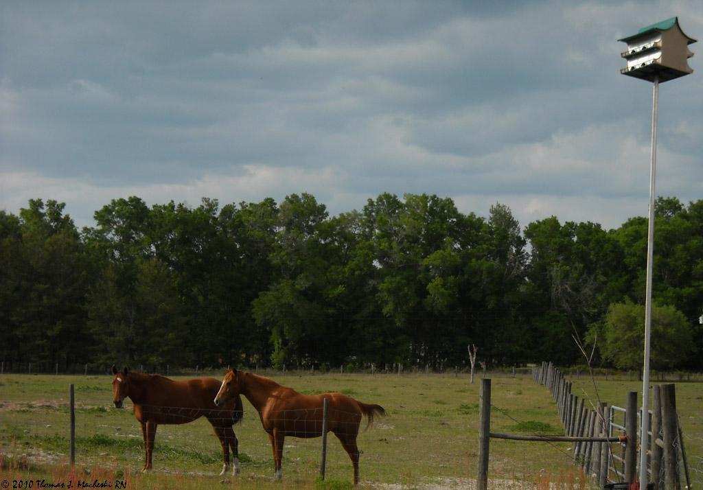 Teh Horses & Neighbors