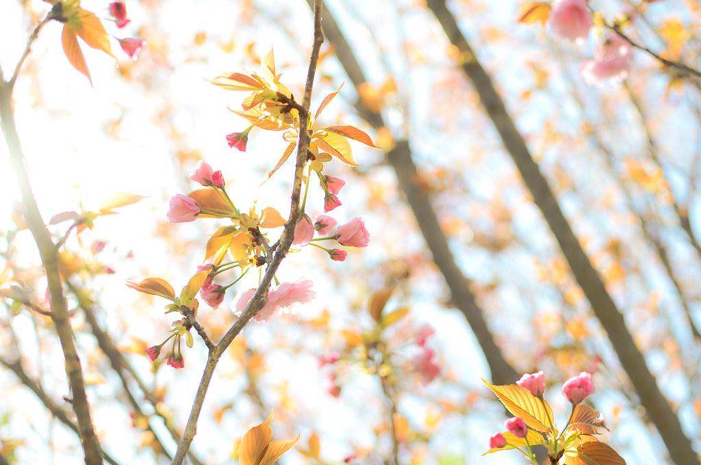 spring2010_58-4