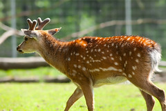 Beautiful dots (***roham***) Tags: wild nature animal zoo nikon d200 greatervancouverzoo nikond200 wildphotography 400mmf35aisii nikon400mmf35ais