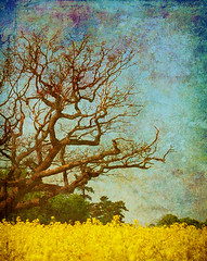 Life And Death (Roamer 57) Tags: blue sky tree green texture yellow nikon branches rapeseed theworldwelivein rubyphotographer awardtree dragondaggerphoto artistictreasurechest magicunicorntheverybest magicunicornmasterpiece
