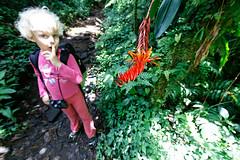 baudchon-baluchon-costa-rica-santa-elena-18