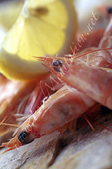 Sea - Prawns with Lemon Wedge on Marble