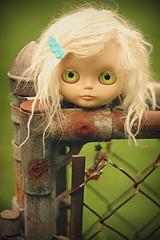 Head on a Fence - 328/365 ADAD