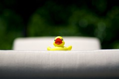 yellow toy duck sun bathing (Nick Harris1) Tags: sun yellow relax toy duck chair rubberducky rubberduck chill sunbathing chaise mellow